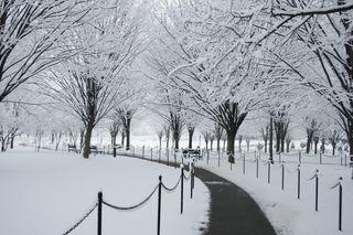 Snownub